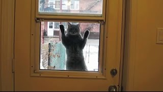 """Cats Who Desperately Want to Come Inside Compilation"" 