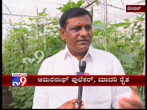 Even in Drought, Bidar Farmer Finds Success in Cucumber Cultivation Under Polyhouse