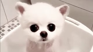 CUTIEST PET IN THE ENTIRE WORLD (MUST SEE)