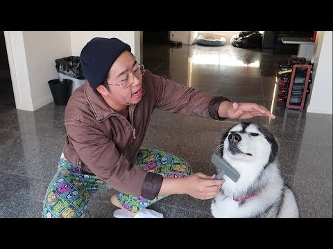 Vietnamese Dad Takes Care Of Dog