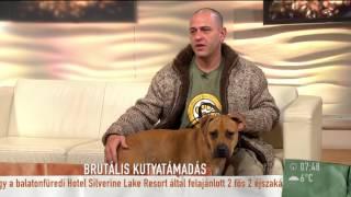 Ezt tegyük, ha megtámad egy kutya-2015.10.12.–tv2.hu/mokka