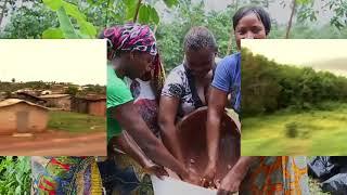 Выращивание какао на плантациях Cemoi в Африке