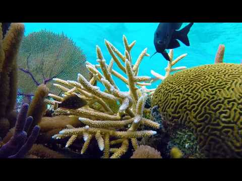 Snorkeling Grand Cayman Rum Point