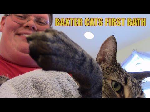 Baxter Cats First Bath
