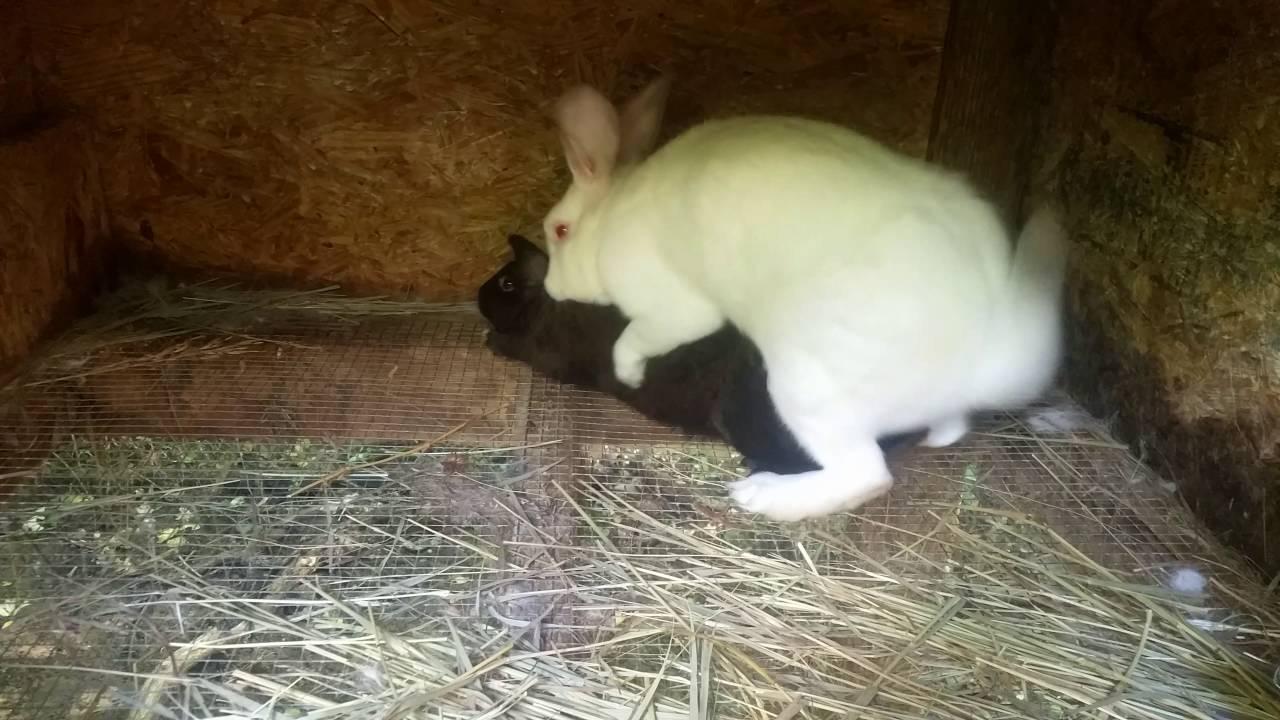 Do Rabbits Burrow
