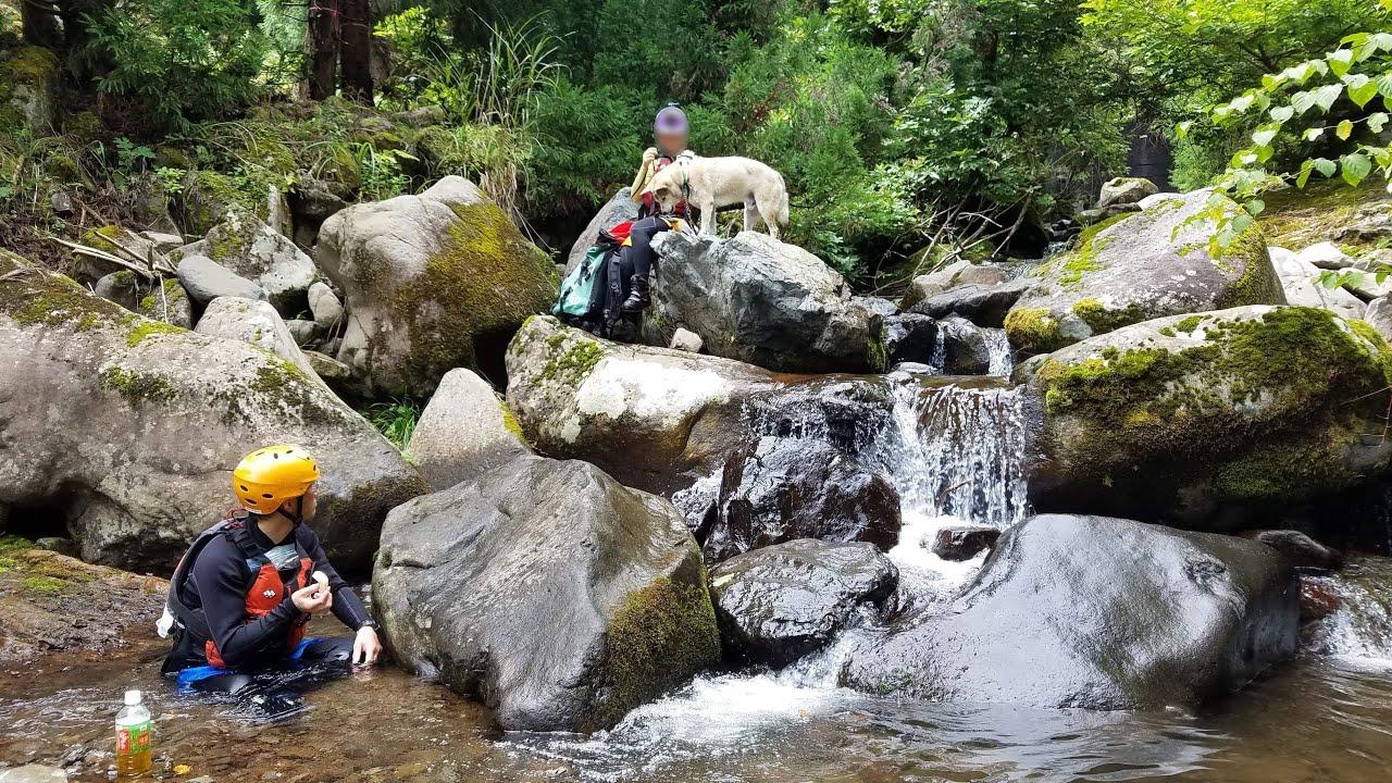 【雑種犬むぎの大冒険】岩を飛び 滝を越え 1人で帰る犬🐕🐾