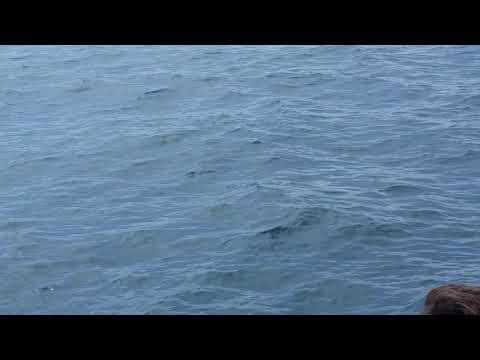 Blue whale Newport