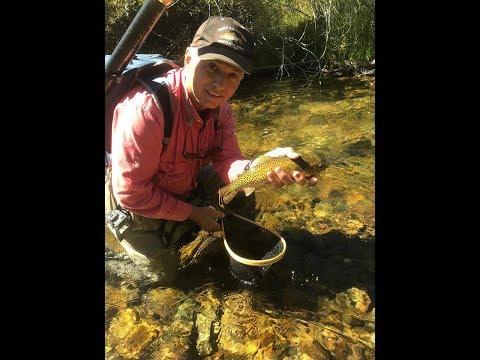SOTF: Idaho Small Stream Cutthroat Trout Fly Fishing