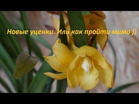 знакомств орхидея