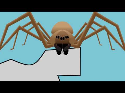 A Guide to Brown Recluse Spiders