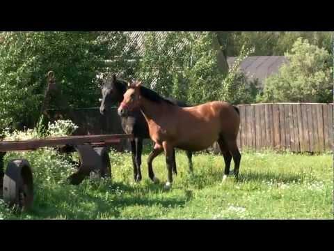 Лошади красивое видео.