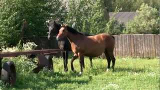 Лошади красивое видео(http://helena-k.ru/ http://vk.com/helena_rus Фото и видеосъемка с лошадьми, свадебное фото и видео с лошадью, прогулки на лошадя..., 2012-07-18T08:39:01.000Z)