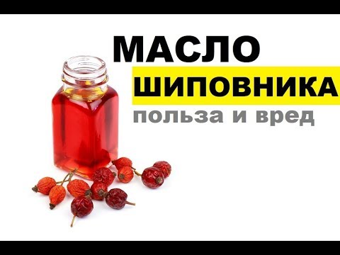 Масло шиповника: польза и вред, советы по применению | растительные | холестерин | шиповника | шиповник | растяжки | гастрит | масло | масла | заеды