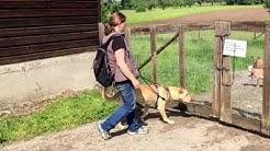 Moritz legt die Prüfung zum Hundeführerschein ab