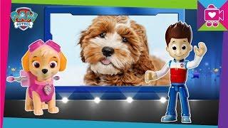 Герои в реальной жизни Мультик для детей про щенков Развивающее видео