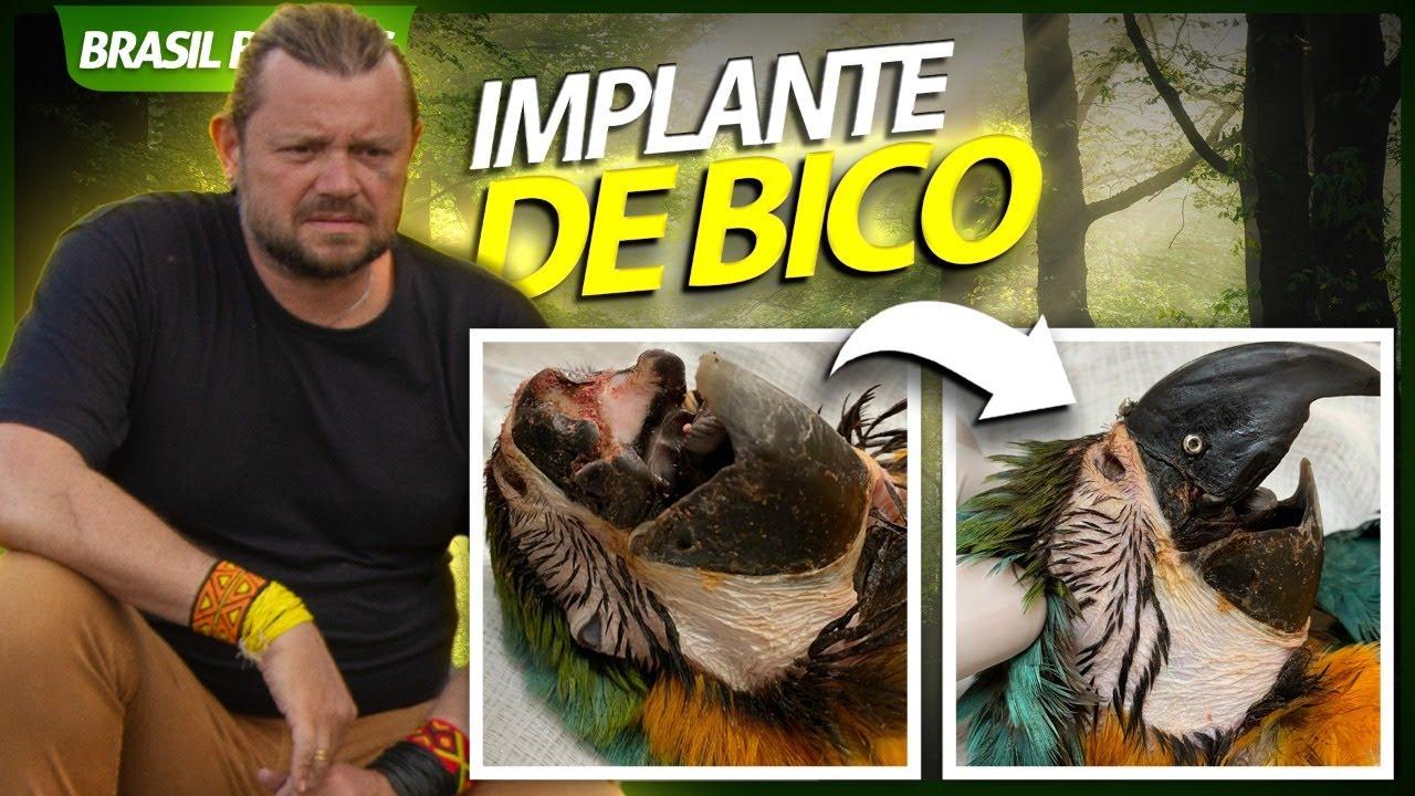 IMPLANTE DE BICO EM UMA ARARA! | RICHARD RASMUSSEN