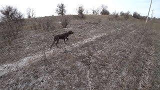 #14 Охотничий Влог Курцхаар
