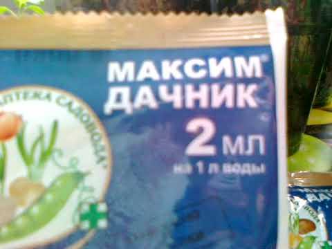 Препарат Максим- лучшее средство для лечения и профилактики почвенных инфекций