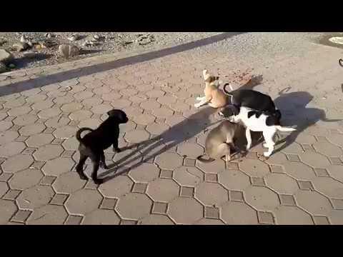 Feeding Stray Dog & She's Feeding Stray Puppies