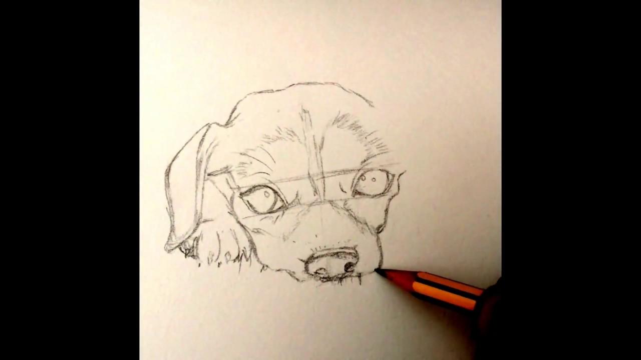 Como Desenhar Cachorro Realista Youtube