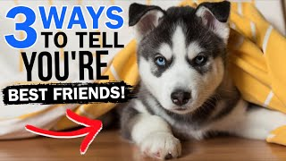 3 Ways To Tell If Your Siberian Husky IS YOUR BEST FRIEND!