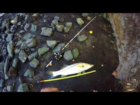 Snook Fishing Lake Worth Florida