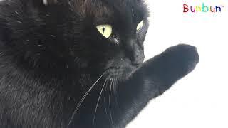 Loài Mèo Kỳ Lạ Nhất Trên Thế Giới (The most strange cat in the world) 💓 BunBun Kids TV
