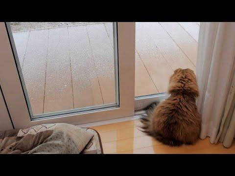 生まれて初めて雪と雪だるまを見た猫はこんな感じ