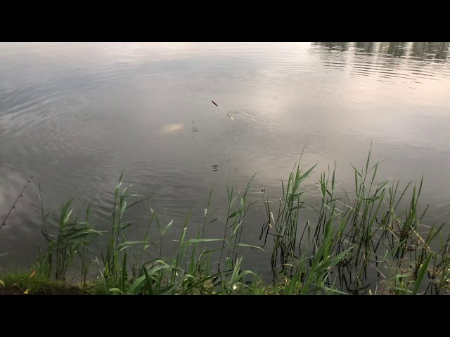 Ihmsen - Der Forellengott Forellensee Rosenweiher Der Wels! Der Stör! Der See! Nachtangeln beginnt!