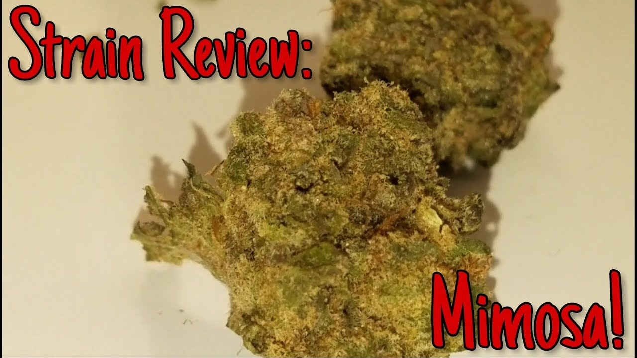 Strain Review: Mimosa! - YouTube