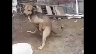 Terbiyesiz köpek çok komik izle ve gör  :)