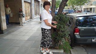 Денежное дерево на улицах Буэнос Айреса(Как растет денежное дерево на улицах Аргентины От чего зависит размер кроны денежного дерева Толстянка..., 2015-03-27T02:05:32.000Z)