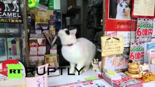 В Японии живет вечно удивленная кошка Хати