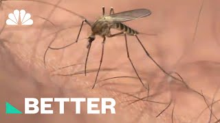 Protect Yourself From Zika This Summer With These Tips | Better | NBC News