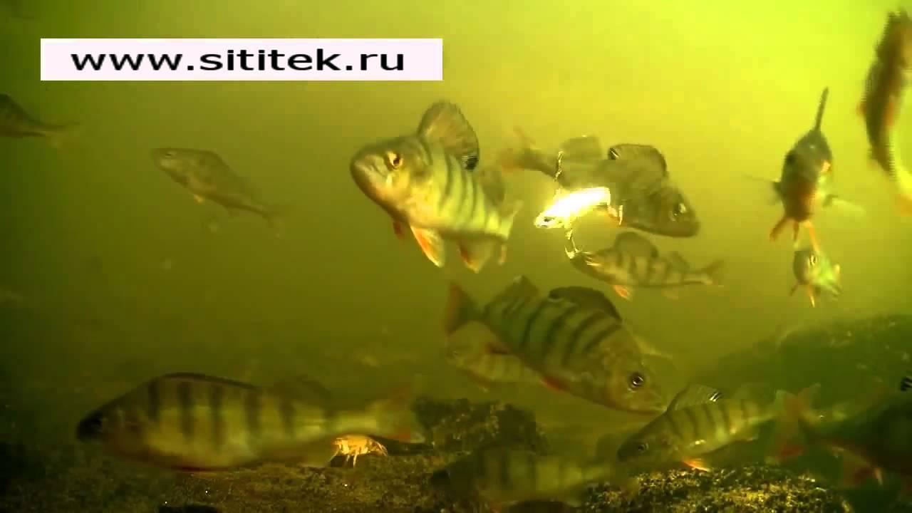 sititek ru video FishCam 360