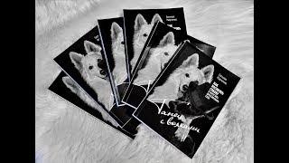 """Интервью о книге """"Танец в волками"""". Евгения Марченко"""
