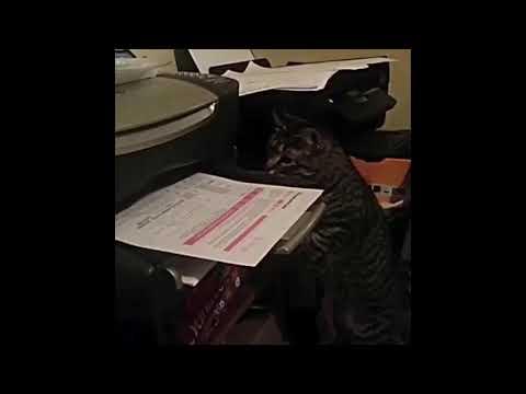 Descargar Video Cuando te urge un documento y la impresora se tarda horas