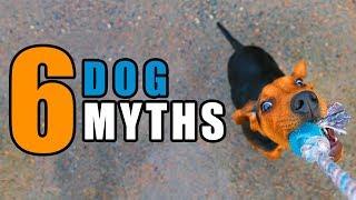 6 More Dog Myths | Talkin Dogs List Show