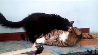 Кот разговаривает с другим котом