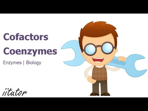 cofactors and coenzymes | biology | biology