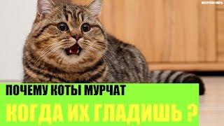 Почему коты мурчат когда их гладишь?