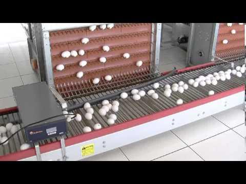Video Institucional Grupo Industrial El Granjero