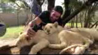 Superstars  with lions in Johannesburg, South Africa