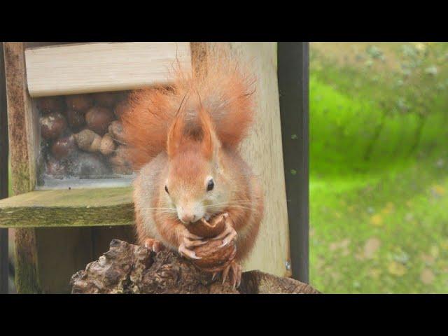 Squirrel Feeder!