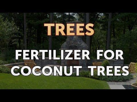 Fertilizer For Coconut Trees