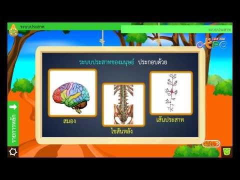 วิทยาศาสตร์ ม.2 - ระบบประสาท (6)
