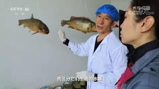 《地理·中国》 20210803 探源嫩江湾| CCTV科教