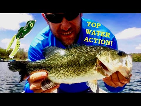 Shallow water Bass Fishing (Top Water Scum Frog Action)