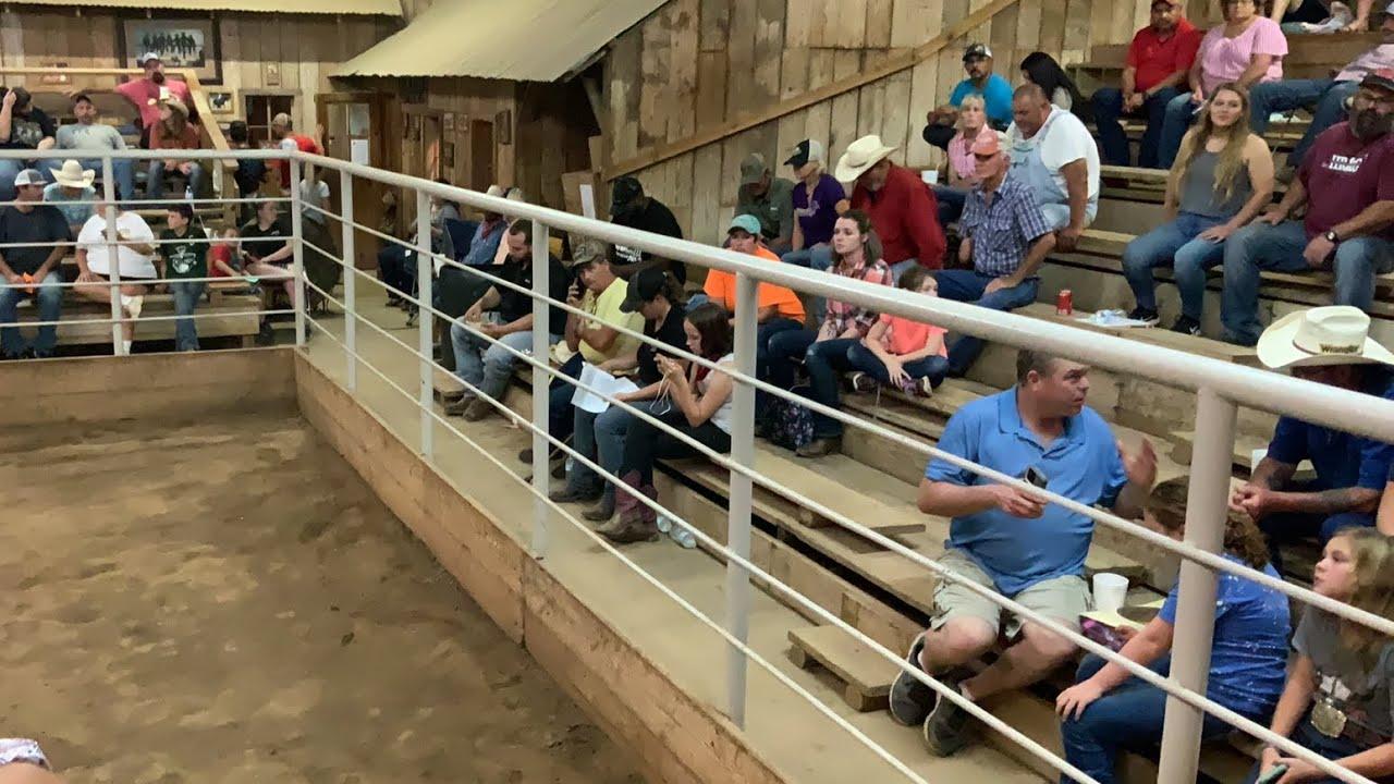 Prison horse sale 9-12-2020