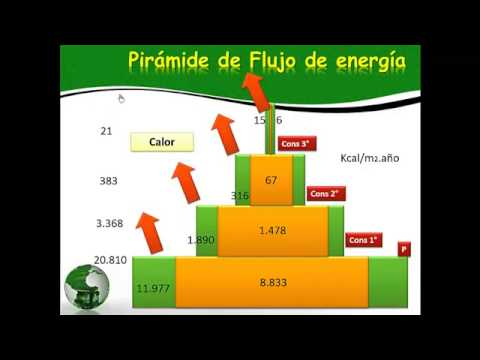 biomasa y piramides ecologicas
